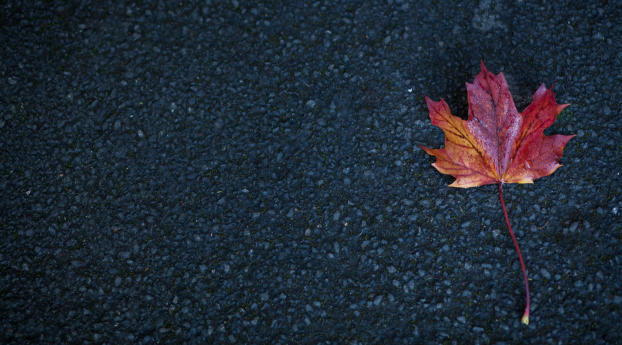 HD Wallpaper | Background Image Leaf Autumn