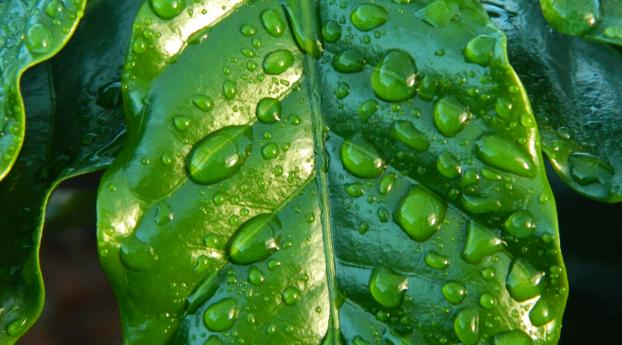 HD Wallpaper | Background Image leaf, drop, surface
