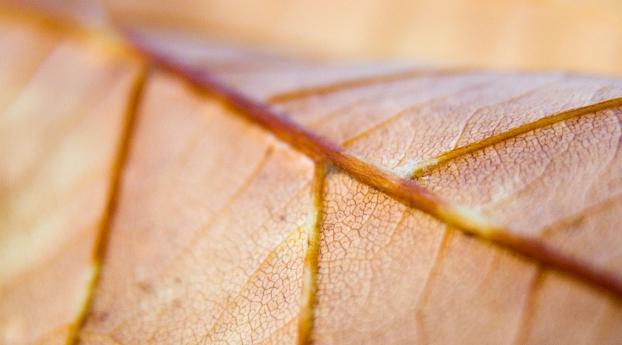 HD Wallpaper | Background Image leaf, veins, macro