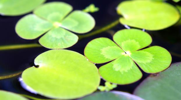 HD Wallpaper   Background Image leaves, water, swim