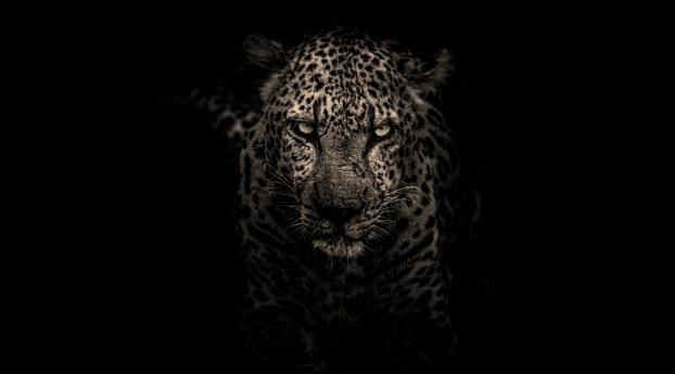 HD Wallpaper | Background Image Leopard