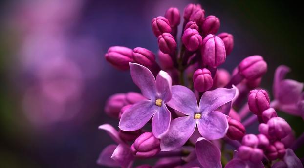 Lilac Micro Wallpaper 750x1334 Resolution