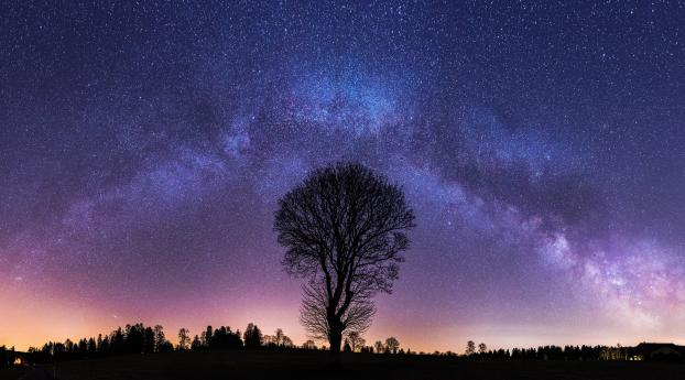 Milky Way and Lonely Tree Wallpaper