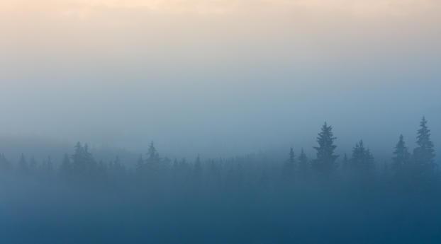 Misty Foggy Forest Hd 4k Wallpaper