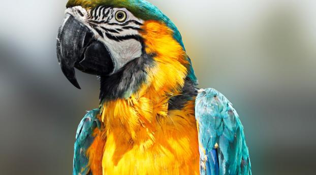 parrot, bird, feathers Wallpaper