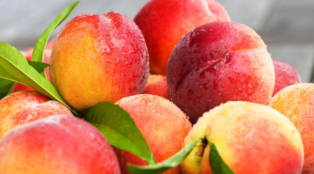 HD Wallpaper | Background Image peaches, nectarines, leaves