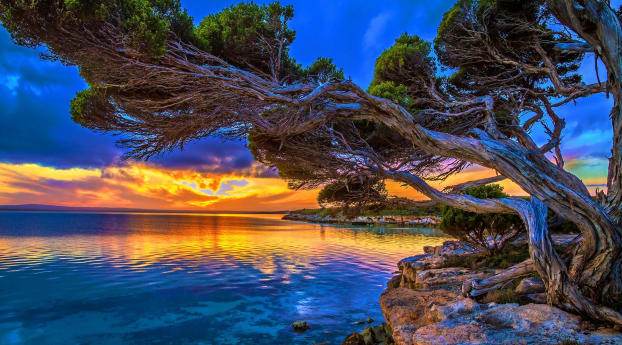 Slanting Tree Above Ocean at Sunset Wallpaper 1152x864 Resolution