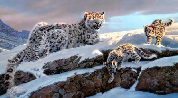 Snow Leopard Winter 4K Wallpaper 1680x1050 Resolution