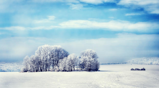 HD Wallpaper | Background Image Snowy Forest 4K