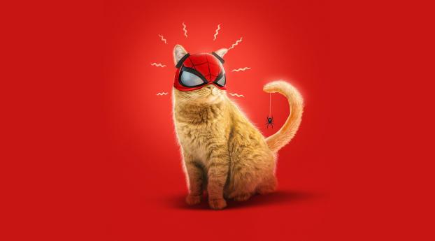 Spider Cat Spider-Man Miles Morales Art Wallpaper in 1125x2436 Resolution