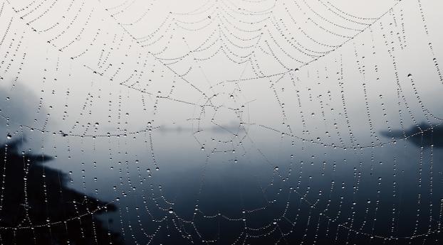 Spider Web Wallpaper 1440x900 Resolution