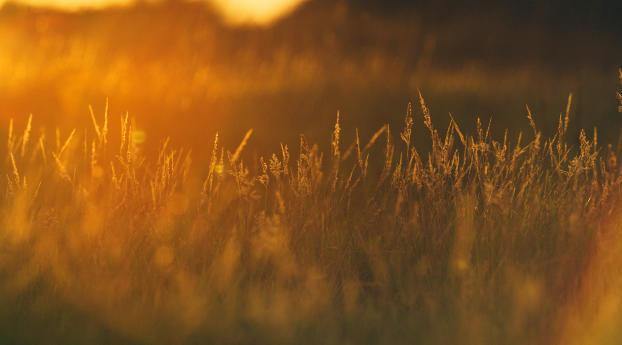 Sunset In Wheat Grass Field Wallpaper
