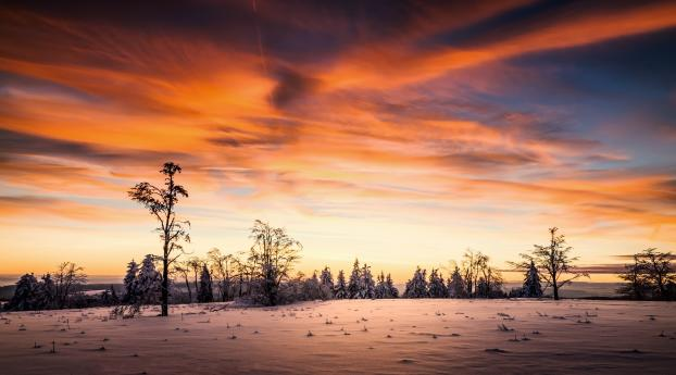 Sunset Winter at Empty Forest Wallpaper