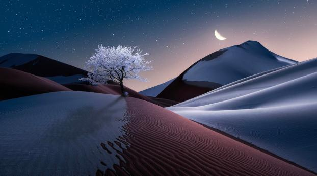 HD Wallpaper | Background Image The Tree in Dune