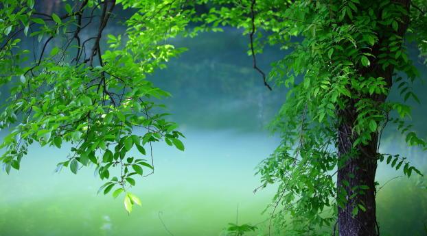1242x2688 Tree Leaves Summer Iphone Xs Max Wallpaper Hd