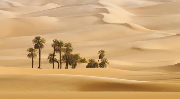 HD Wallpaper | Background Image Trees In Desert Dune Photography