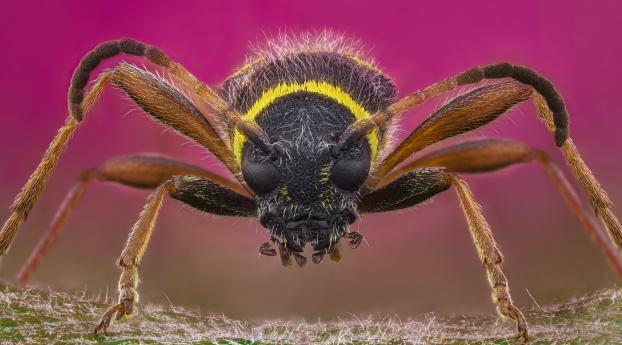 Wasp Insect Close-Up Wallpaper in 1125x2436 Resolution