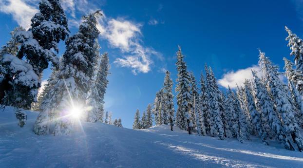 1242x2688 Winter Snow Sunlight Iphone Xs Max Wallpaper Hd
